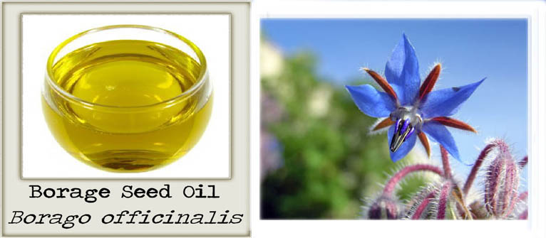 Natural Borage Seed Oil Uses
